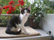 Katzenbetreuung bei Ihnen daheim
