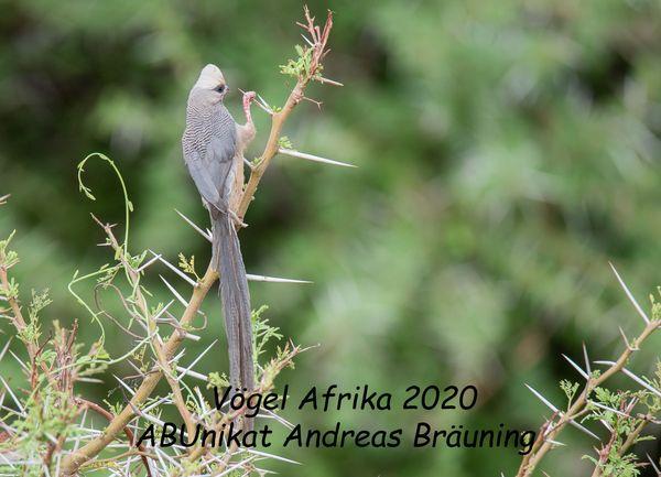 Fotokalender 2020 Vögel Afrika