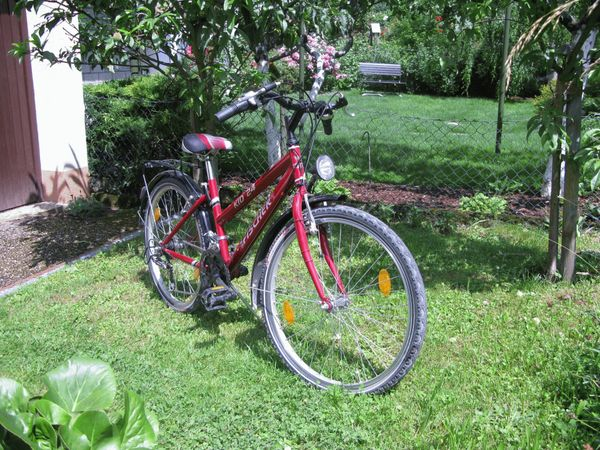 Jugend Mountainbike 24