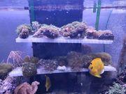 Meerwasser Kaiser und Nemos