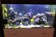 Korallen ableger über 100 Arten