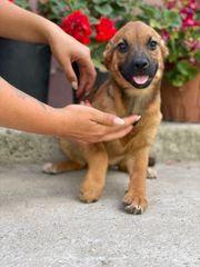 Biba - Ein herziges Hundekind sucht
