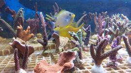 Fische, Aquaristik - Korallen Salz Meerwasser Weich und