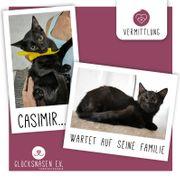 Katerchen Casimir sucht seine Familie