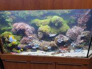 Meerwasseraquarium mit Unterschrank