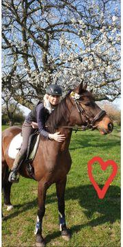 Verkauf von Hannoveraner Pferd Chico