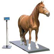 Mobile Pferdewaage Pferdeanhänger wiegen Stockmaß