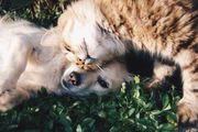 Teampartner für Hunde und Katzennahrung