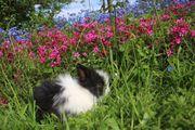 Drei kleine Teddyzwerge Kaninchen suchen