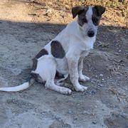 Tierschutz Nico sucht ein Zuhause