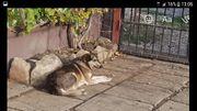 Bubu Rüde aus dem Tierschutz