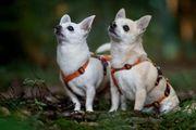 Zoylo und Loty suchen ihren