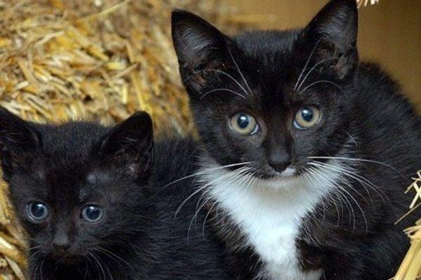 2 Katzenbabys gesucht