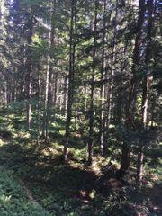 Wald bewirtschaften