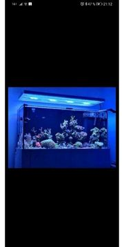 Aquarium Meerwasser OHNE Inhalt