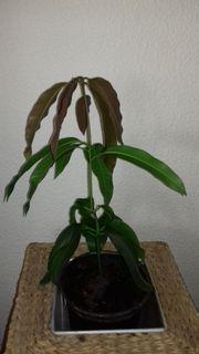 Verkaufe Natur-pflanze Zimmer-Pflanzen