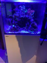 Red Sea Reefer 170 komplett
