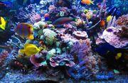 suche fische Meerwasser und korallen