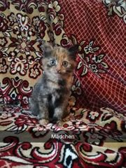 Lebensfrohe Kätzchen suchen Liebevolles zu