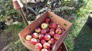 Apfelsaft von alten Apfelsorten 5l