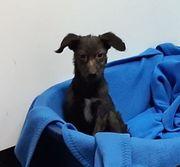 Junghund Sandro sucht ein Zuhause