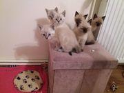 Wir sind 6 Katzenbabys und