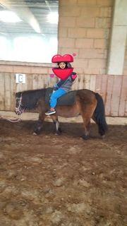 Reit- und Pflegebeteiligung auf Pony-