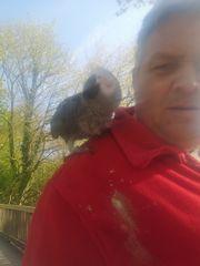 Ich suche dringend Papagei zu