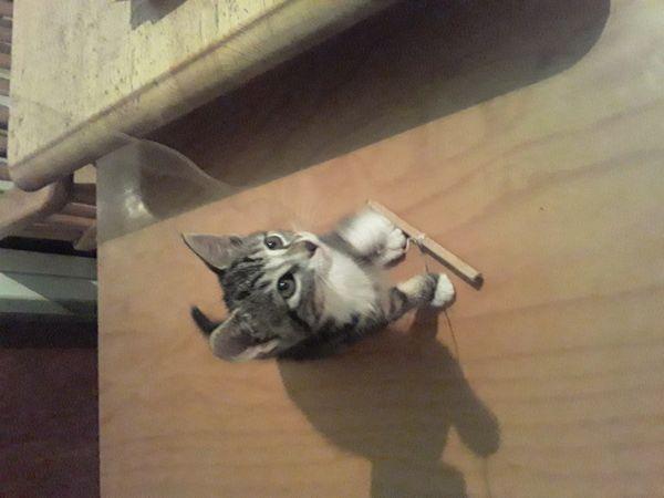 Babykatzen Babykitten