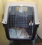 Hunde- bzw Flugbox für große