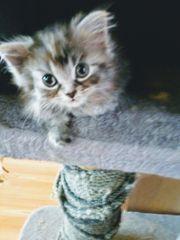 Miau Lotti 9 Mon junge