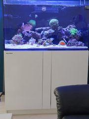 meerwasseraquarium komplett 375l