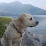 Suche mit meinem Labrador eine