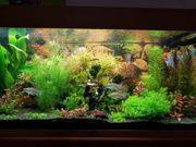 300 Liter Aquarium
