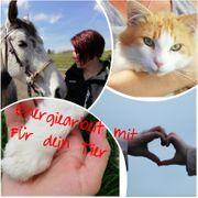 Tierkommunikation Energie Arbeit Blockaden lösen
