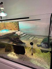 2 Baby Wasserschildkröten suchen neues