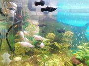 Biete Fisch Besatz an