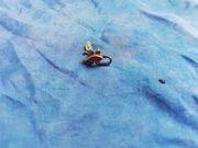 Einzelner Ohrstecker Skorpion