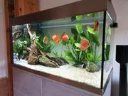 Aquarium und Diskusfische wegen Zeitmangel