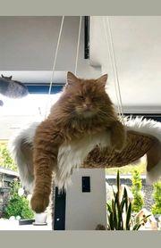 Katzenhängeschaukel