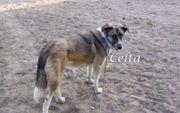 Liebe und entspannte Hündin Celta
