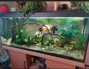 Aquarium mit Fischen deko usw