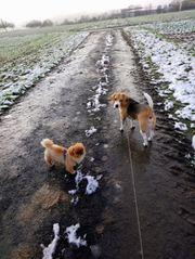liebevolle und zuverlässige Hundebetreuung in