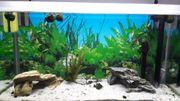 Kaltwasser-Aquarium komplett