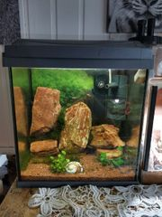 nano aquarium 30l mit fische