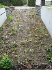 Wildwuchs - Unkrautbeseitigung - Gartenflächen kultivieren