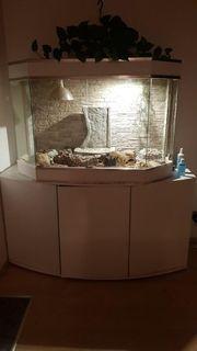 Terrarium mit Unterschrank und Leopardengeckos