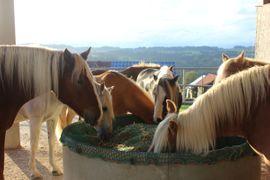 Pferdeboxen, Stellplätze - HIT Aktivstall Allgäu - Pferdepension Sinz -