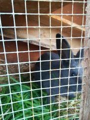 Kaninchen Stall zu verkaufen