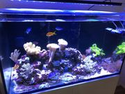 Aquamedic Armatus 300 Meerwasseraquarium mit